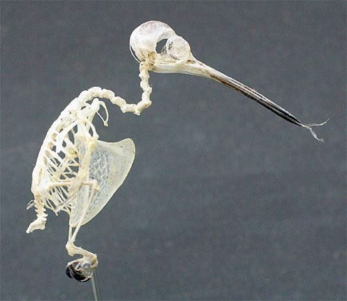 small skeleton halloween decoration