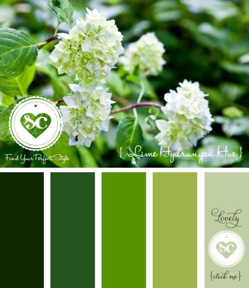 222 Lime Hydrangea Hue/ Designer Asmalina © 2013 Sorbetcolour ™