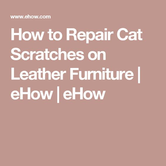 Leather Furniture Furniture And Cats On Pinterest