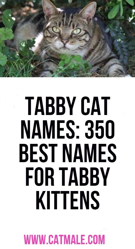 Tabby Cat Names 350 Best Names For Tabby Kittens Tabby Cat Names Cat Names Tabby Kitten