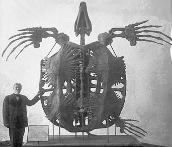 animals, turtles, fossils, extinct - The largest species of prehistoric turtle weighed two tons.: