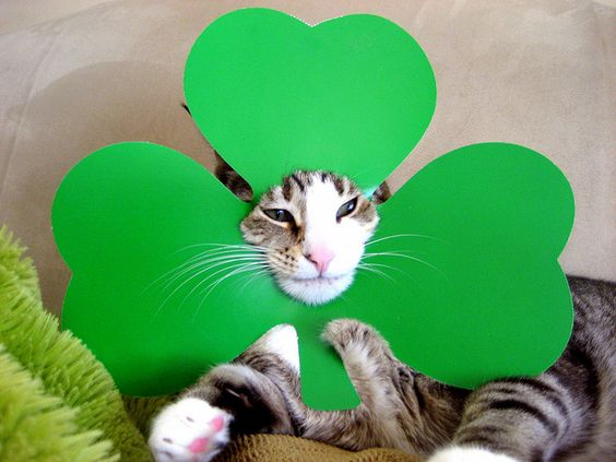 pecan shows off his shammrock for st pat's day.
