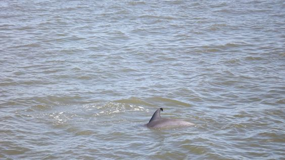 Dolphin watching cruise,  Cape May, NJ  Oct. '12