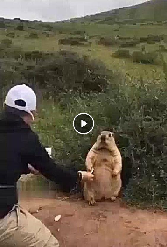 Esse homem está tentando se aproximar do animal, mas ele está com medo.