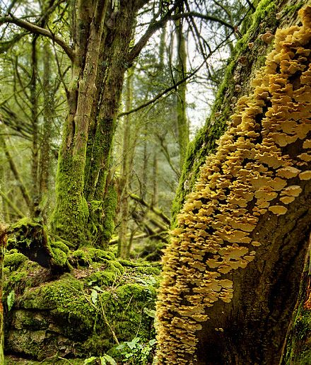 puzzlewood - Google Search