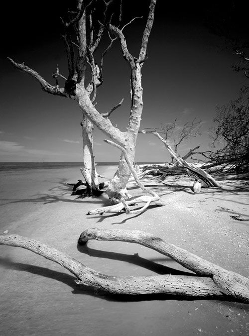 Clyde Butcher waded into the wilderness one summer's day 26 years ago with nothing more than a camera. He returned with the wild soul of South Florida, in black and white. BY JONATHON KING The natu...