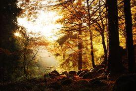 Waldlichtung/10279741