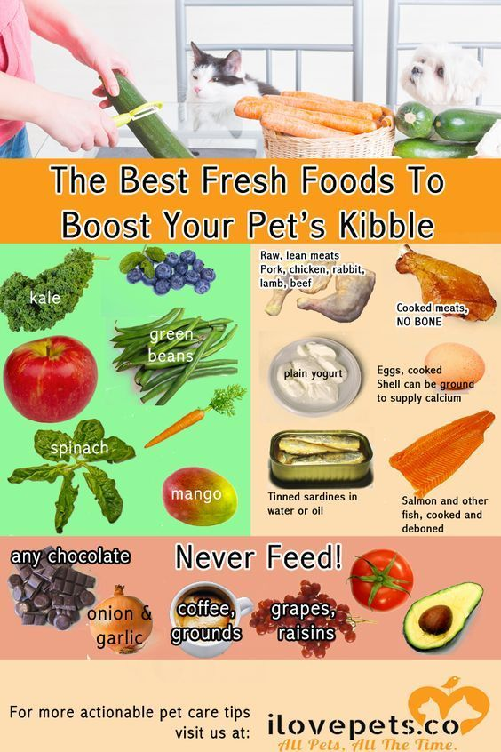 The Best Fresh Foods To Boost Your Pet S Kibble Dog Food Recipes