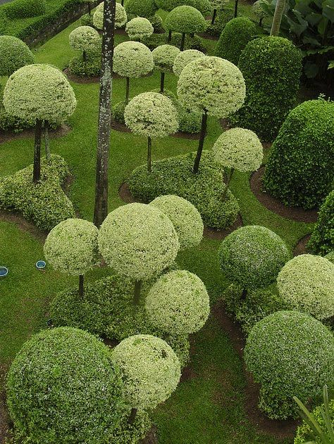 Topiary Garden in Shades of Green | Content in a Cottage