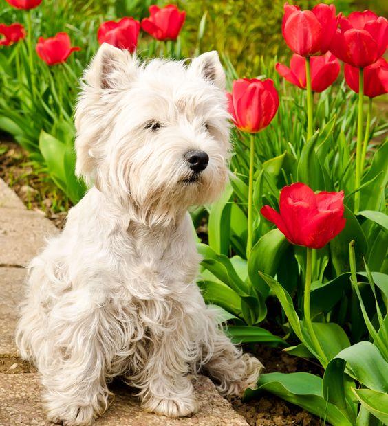 Éloigner les chiens : Des astuces de grand-mère pour entretenir votre jardin - Linternaute
