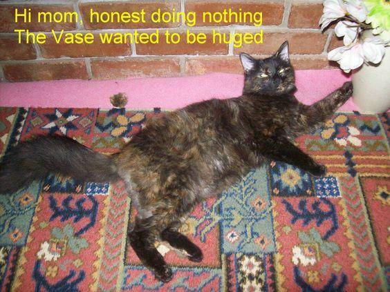 SAS Molly The Kitten DAY 183 Molly Vs vase http://sasmolly.blogspot.co.uk/