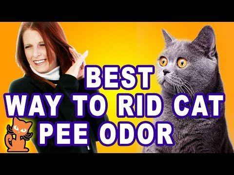 Cat pee oder in wine