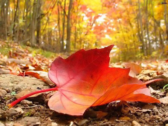 Folha seca laranja: