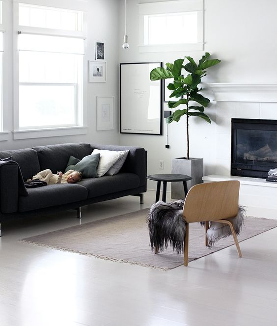 Minimalism interior fiddle leaf fig