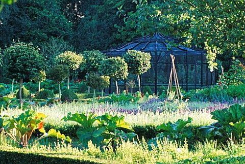 AN_OLD_FRUIT_CAGE_SURROUNDED_BY_LAVENDER_AND_RHUBARB_IN_THE_WALLED_VEGETABLE_GARDEN_AT_WEST_GREEN_HO