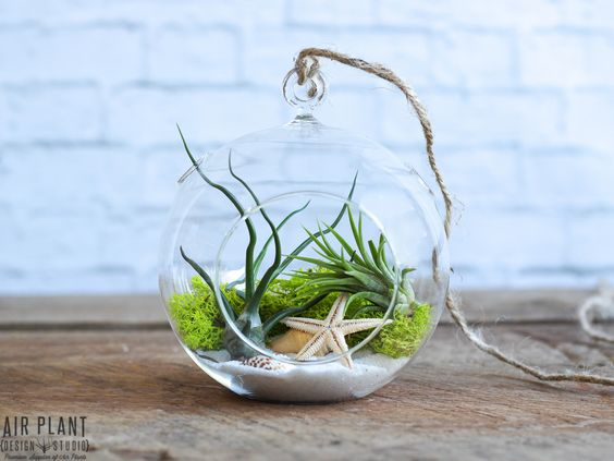 A little bit of the beach, no matter what the weather. The Sea Scape Terrarium showcases the easy-to-care-for funky air plants.