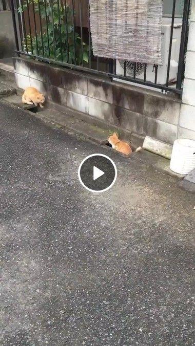 Gatinhos fofos brincando de pega pega