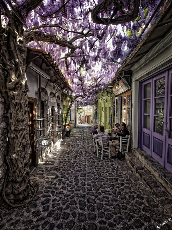 relaxing under purple blossoms, Molyvos, Lesvos, Greece