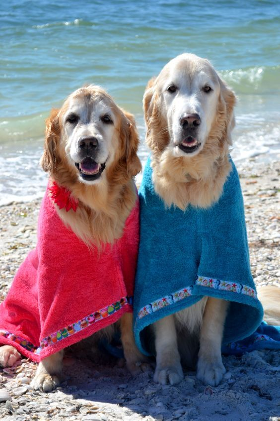 7 Safety Tips For Boating With Your Dog Dogs Golden Retriever