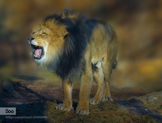 tribute to Cecil by valguzman0