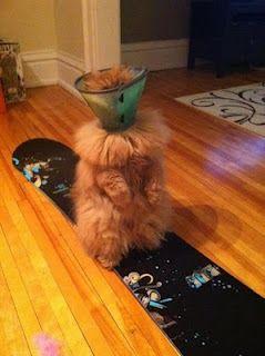 poor kitty ;)