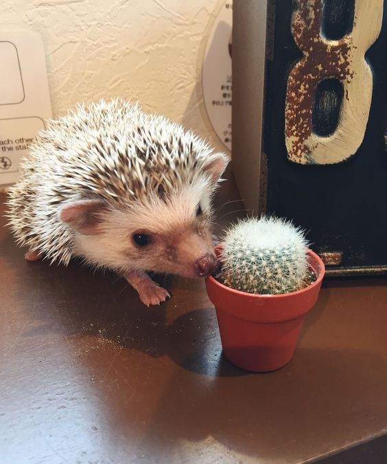 I went to a hedgehog café in Tokyo — & it was bizarre.: