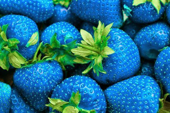 Morango azul, morango verde, morango amarelo. Comida de verdade, ou brincadeira no photoshop?