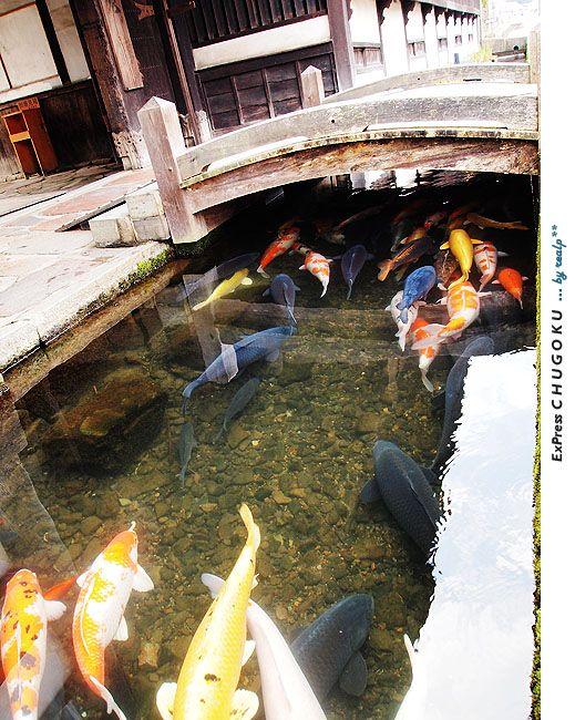 ป กพ นในบอร ด Koi Pond