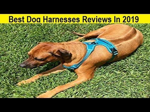 Top 3 Best Dog Harnesses Reviews In 2019 Dog Harness Dog