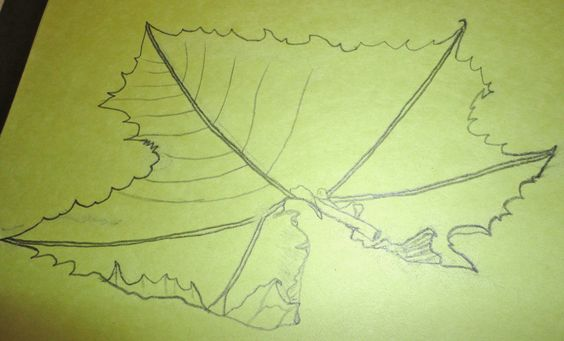 Leaf Drawing, in pencil, by a 7th grader in Ms. Hazlett's Art class~