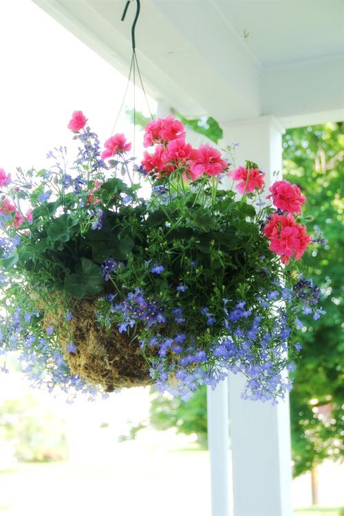 Hanging Basket Like The Combination Of Colors Hanging Plants
