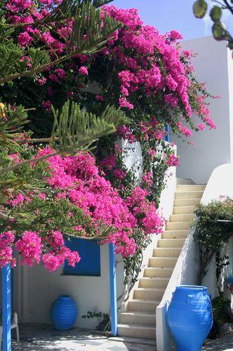 Pretty Santorini: