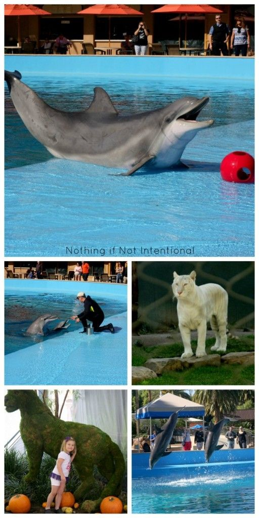 Things to do in Vegas with kids! Review of Siegfried and Roy's Secret Garden and Dolphin Habitat