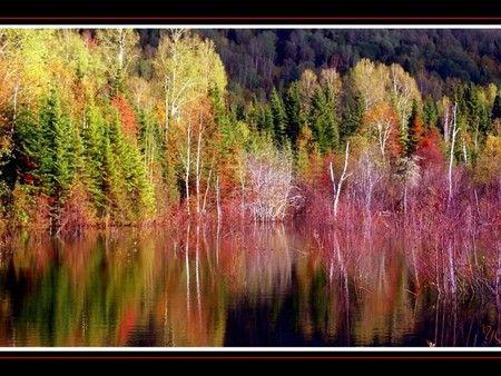 AUTUMN TREES BY RIVERSIDE - Other Wallpaper 140844 - Desktop Nexus Nature
