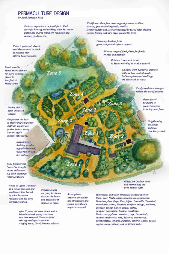 Permaculture And Food Forest Gardens Native Plant Talk: Permaculture Site Design