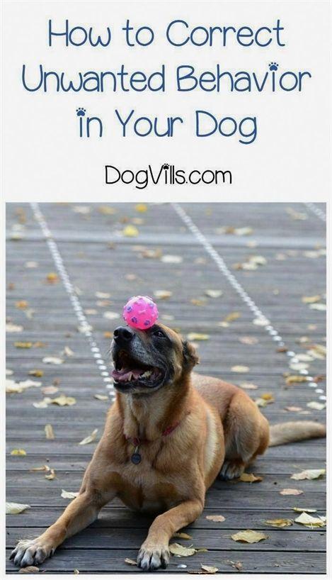 Dog Training Jackson Tn Dog Training Zionsville Indiana Dog