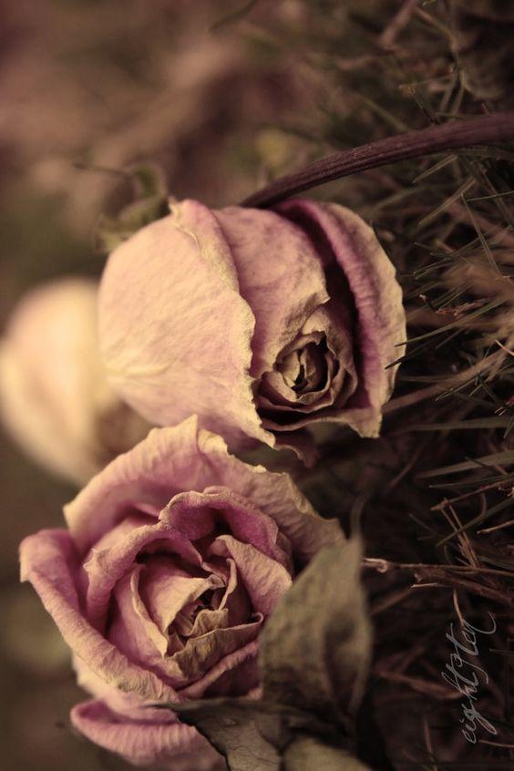 Roses…