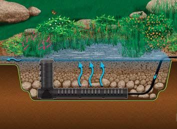 Bog filtration wetland filtration plant filters monmouth for Best pond plants for filtering