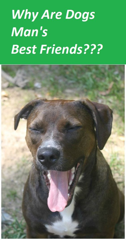 Pin By Ezra Martin On Man Best Friend Dog Food Reviews High