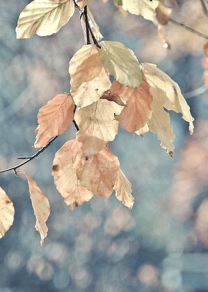 Autumn leaves: