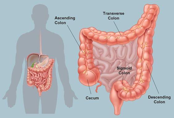 الفرق بين دم البواسير ودم القولون In 2020 Colonic Hydrotherapy Colon Cleanse Natural Colon Cleanse