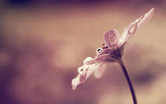 naturaleza flores macro flora profundidad de campo - Wallpaper (# 1216118) / Wallbase.cc