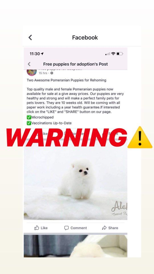Scam We Don T Put Up Posts On Other Pages Of