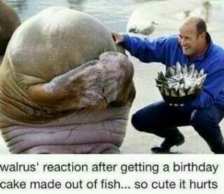Reacción de una morsa al ver su tarta de cumpleaños.
