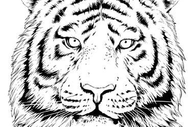 Coloring Pages Of Animals From Around The World Choose From An