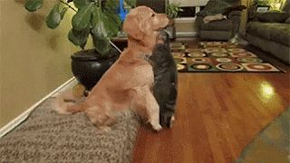 WOA Animal - ☆ Cute/ Funny - Community - Google+