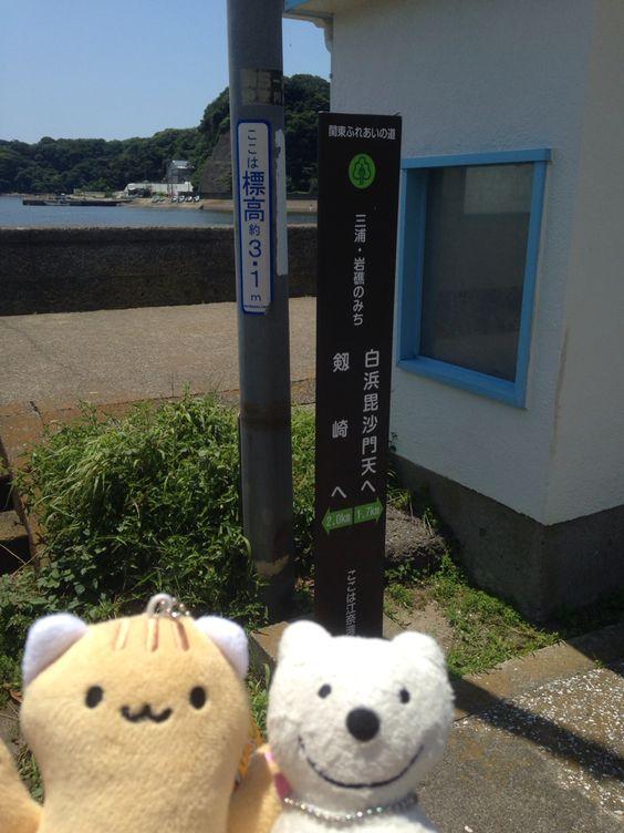 クマ散歩:三浦・岩礁のみちに品行方正なクマ出没 (江奈湾 Ena Bay) The Bear took a walk along Miura Reef!♪☆(^O^)/  #品行方正 #Bear #三浦