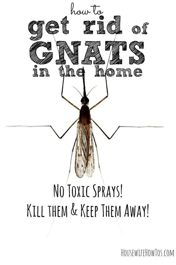 Tired of swatting at gnats in your home? Here's how to get rid of them without toxic sprays.