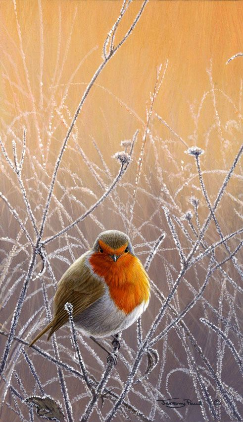 I love Robins, they remind me of Christmas but I love to see them in the garden all year round.