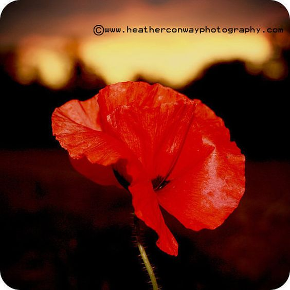 remembrance day o canada song